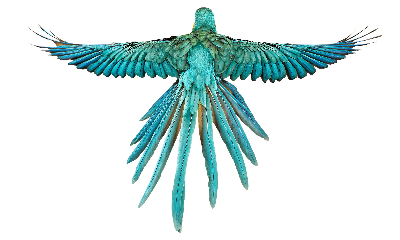 Bird - Andrew Zuckerman